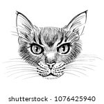 angry cat head. ink black and... | Shutterstock . vector #1076425940