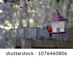 bright red male northern... | Shutterstock . vector #1076460806
