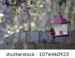 bright red male northern... | Shutterstock . vector #1076460923