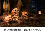 skulls and bones on pile of... | Shutterstock . vector #1076477909