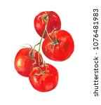 tomatoes on a branch isolated... | Shutterstock . vector #1076481983