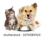 Stock photo kitten and licking lips hungry dog sitting together near bowl isolated on white background 1076585423