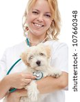 Small fluffy dog at the veterinary doctor - isolated, closeup - stock photo