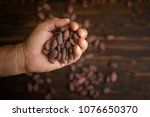 cocoa beans in hand on old... | Shutterstock . vector #1076650370