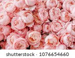 peony roses background   Shutterstock . vector #1076654660
