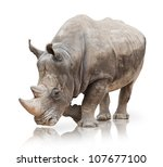 portrait of a rhinoceros on... | Shutterstock . vector #107677100