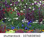 A Colourful Flower Border With...