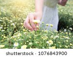 woman is touching flower tea in ... | Shutterstock . vector #1076843900