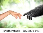 human and fake monkey hand... | Shutterstock . vector #1076871143