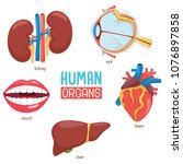 vector illustration of human... | Shutterstock .eps vector #1076897858
