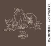 quince  fruit  flower  leaves... | Shutterstock .eps vector #1076900519