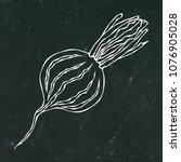 black chalk board. ripe beet  ... | Shutterstock .eps vector #1076905028