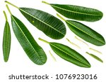 close up of plumeria or... | Shutterstock . vector #1076923016