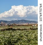 Small photo of Landscape in rural agrarian park close to natural area Llobregat Delta in El Prat,Catalonia.