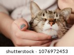 happy cat  owner is stroking... | Shutterstock . vector #1076972453