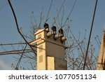 electric post with wires to the ... | Shutterstock . vector #1077051134