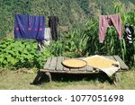 drying laundry and corns | Shutterstock . vector #1077051698