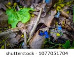 flowers and leaves  top view.... | Shutterstock . vector #1077051704
