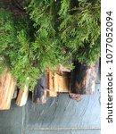 a wet wood pile under a tree | Shutterstock . vector #1077052094