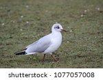 bird on earth | Shutterstock . vector #1077057008