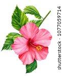tropical flower pink hibiscus... | Shutterstock . vector #1077059714