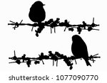 Barbed Wire And Birds. Vector...