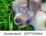 Stock photo dog cute puppies 1077156044