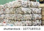williston  vermont  usa  april... | Shutterstock . vector #1077185513