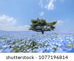 a lonely huge tree on the hill... | Shutterstock . vector #1077196814