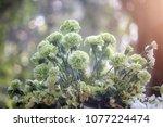 Lovely Fresh Bouquet Green...