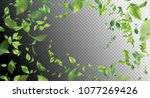 green flying leaves. vector... | Shutterstock .eps vector #1077269426