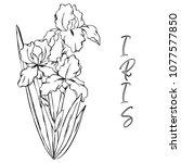 vector contour spring iris... | Shutterstock .eps vector #1077577850