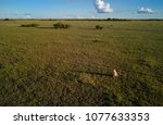 view from above on wild cheetah ... | Shutterstock . vector #1077633353