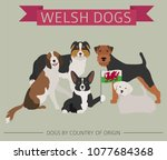 dogs by country of origin.... | Shutterstock .eps vector #1077684368