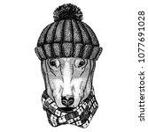 dog for t shirt design cool... | Shutterstock .eps vector #1077691028