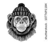 chimpanzee monkey cool animal... | Shutterstock .eps vector #1077691184