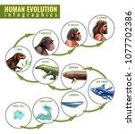 Human Evolution Infographics...