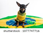 nina  the brazilian puppy dog | Shutterstock . vector #1077747716