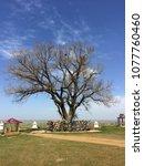lone poplar in steppe. sacred...   Shutterstock . vector #1077760460