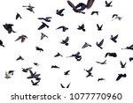 bird isolated on white   Shutterstock . vector #1077770960