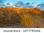 the sand dunes of ostend city... | Shutterstock . vector #1077790346