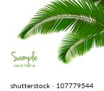 palm leaves on white background....
