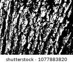 black and white texture of bark ... | Shutterstock .eps vector #1077883820