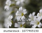 beautiful flowers in spring | Shutterstock . vector #1077905150