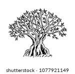olive tree. organic vegetarian...   Shutterstock .eps vector #1077921149