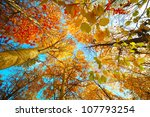 Autumn Trees In A Forest And...
