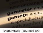 Small photo of gamete word in a dictionary. gamete concept