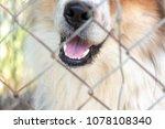 Close Up Of Dog Mouth Pass...