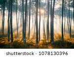 fabulous european forest. ... | Shutterstock . vector #1078130396