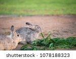 this is a rabbit sitting on... | Shutterstock . vector #1078188323